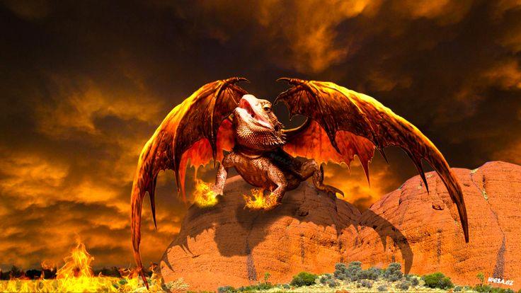 Agama Pogona,  Agama Vousatá, Agama, Dragon ,