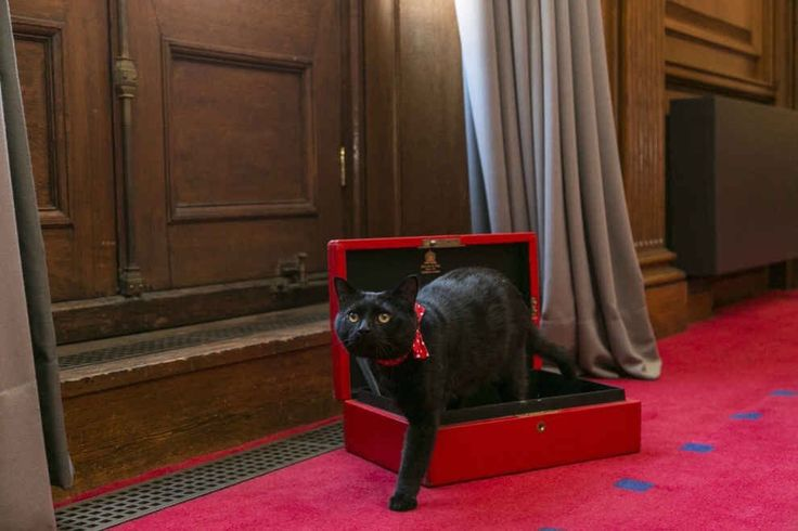The newest appointment at the Treasury - Gladstone the cat