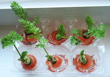 Hojas de zanahoria Las orillas de las zanahorias que normalmente cortamos y tiramos pueden crecer hojas si las pones en un recipiente con un poco de agua. Pon el recipiente junto a una ventana bien iluminada y tendrás brotes de zanahoria para usar como guarnición o en ensalada.