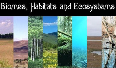 North American Ecosystems Game | Ecosystems | Pinterest | Flashes ...