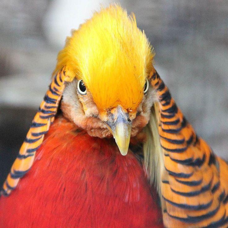 Co to za #ptak? #bird #zoo