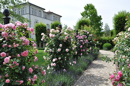Classic Garden Elements - Rose Pillars, Rose Obelisks, Rose Arches - Designs for gardens with Roses