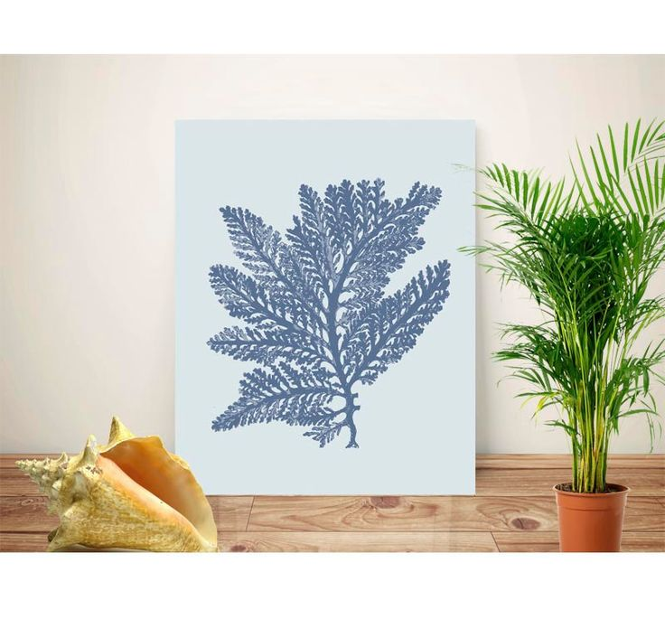 Sea Fan Art, Nautical Art, Sea Fan, Coral, Prints U0026 Posters,