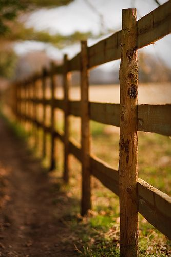 Fence in Sunlight