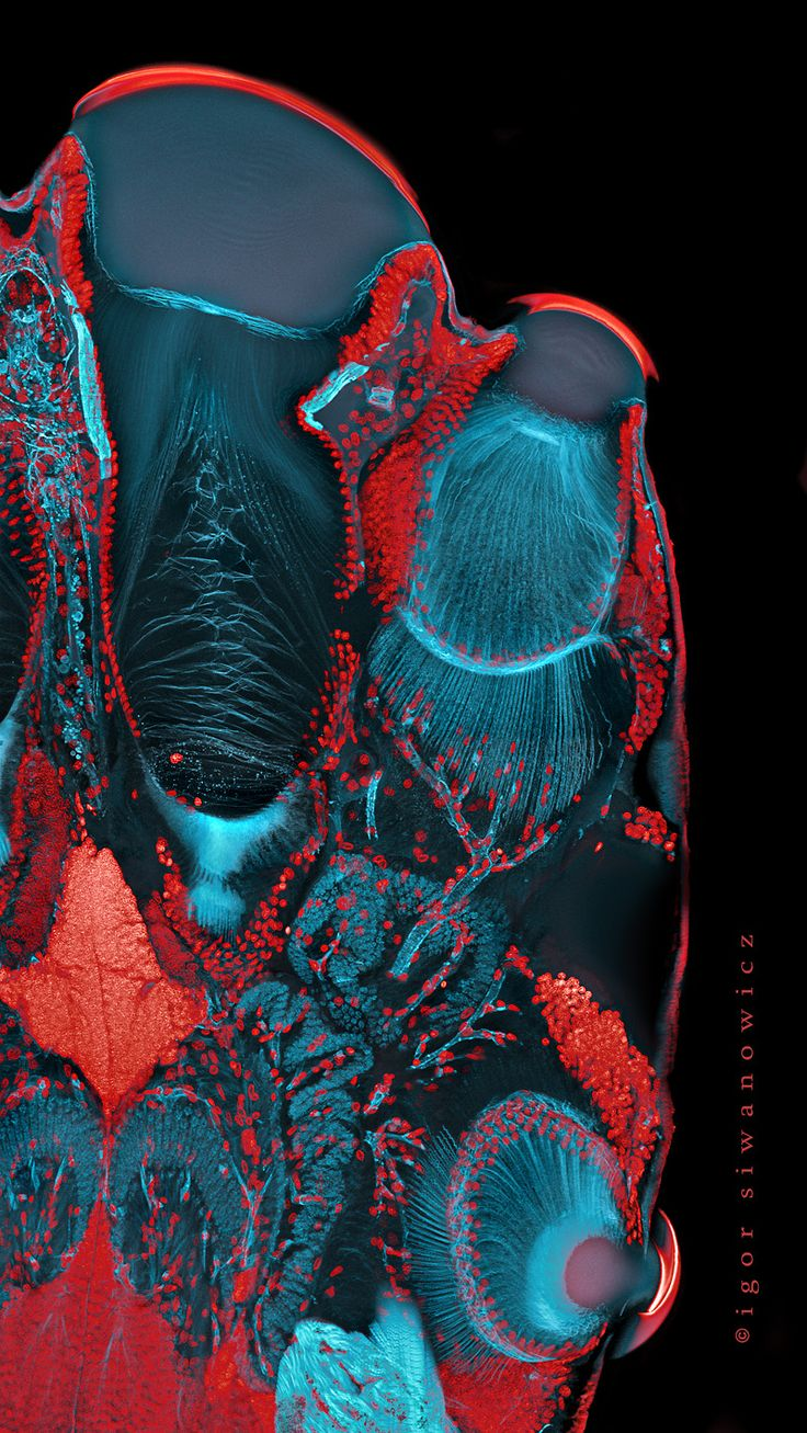 Microscopic photography of insects by Igor Siwanowicz, made with confocal laser scanning microscopy. They show damselflies' and spiders' eyes and rhinoceros beetles.  (source submitted by alex-musings)