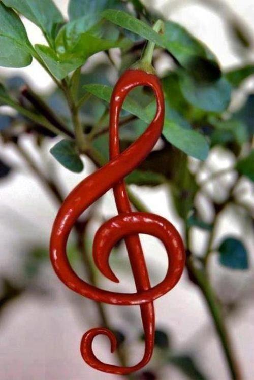 A red pepper...