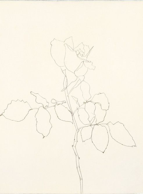 American Artist Ellsworth Kelly Exhibits His Flower and Plant Drawings in New York : TreeHugger
