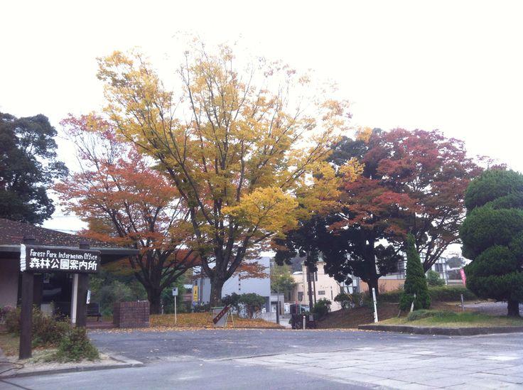 Aichi Forest Park, Japan 森林公園、名古屋。
