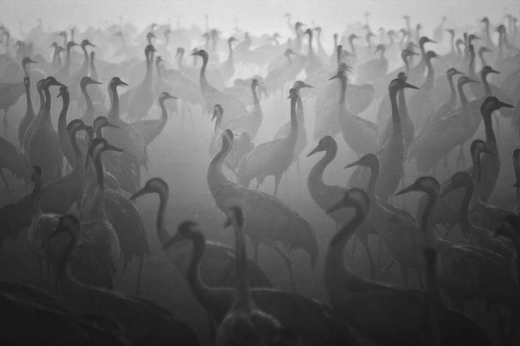 Großartige Schwarz-Weiß-Bilder von Guy Cohen
