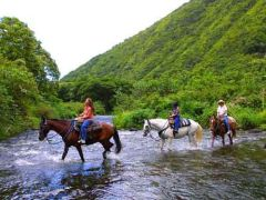 Waipio Valley Horseback Riding Tour, Hawaii, Big Island tours  activities, fun things to do in Hawaii, Big Island | HawaiiActivities.com