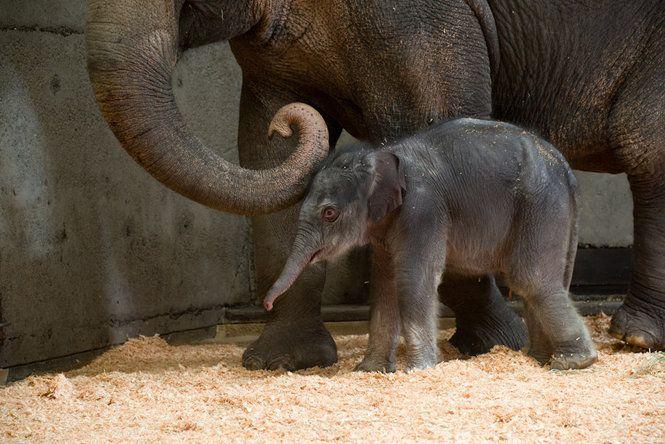 Baby Born in Oregon Zoo