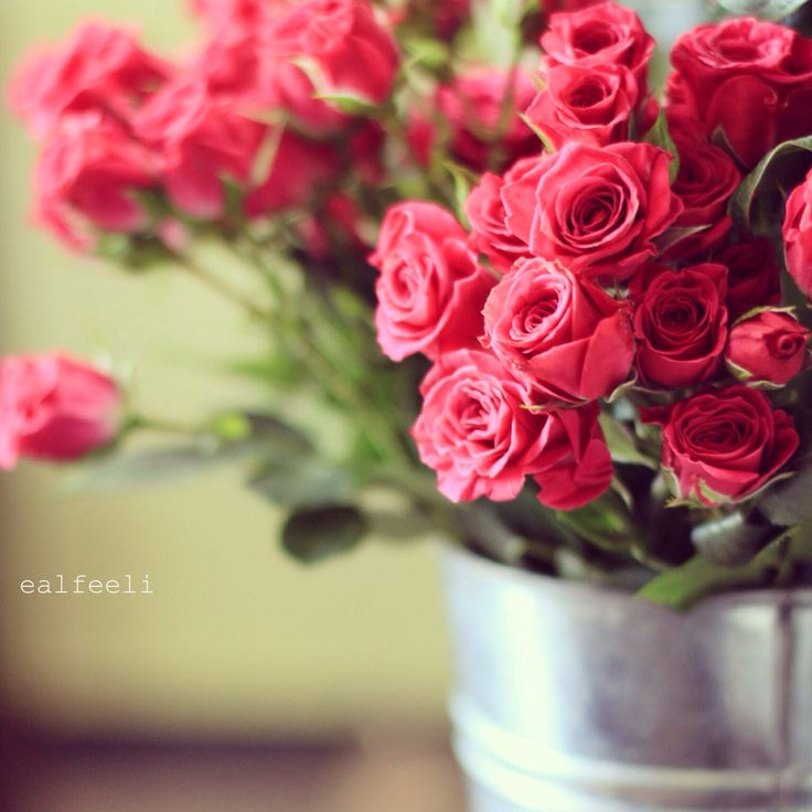 beautiful roses wallpapers with quotes