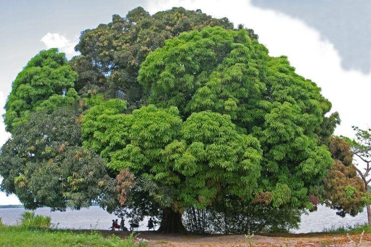 La madera de Mango. ¿La mejor recomendada para hacer muebles sostenibles y ecológicos? - Blog de interiorismo y alta decoración