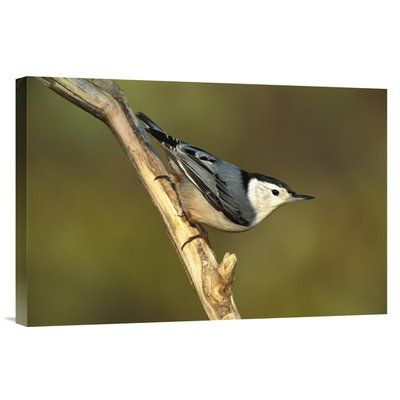 East Urban Home New York Long Island 'White-Breasted Nuthatch' Photographic Print on Wrapped Canvas Size: