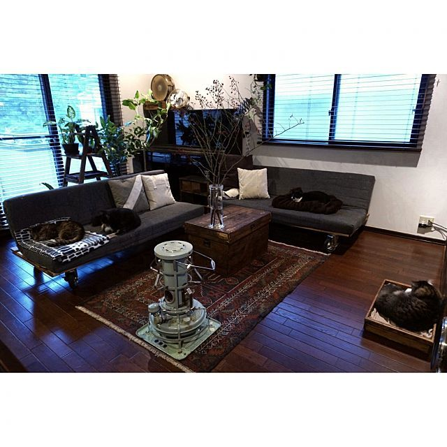 jnkaiさんの、Lounge,DIY,古道具,IDEE,PUEBCO,オールドキリム,Aladdin,猫と植物,old kilim, 犬,麺屋木箱についての部屋写真