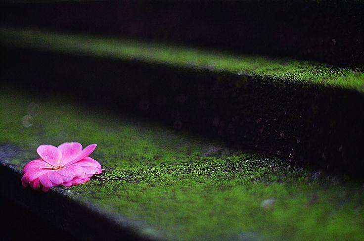 faire livrer un bouquet de fleurs à domicile 062 #fleurs #bouquet
