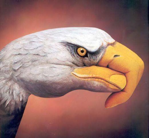 Eye of the eagle..