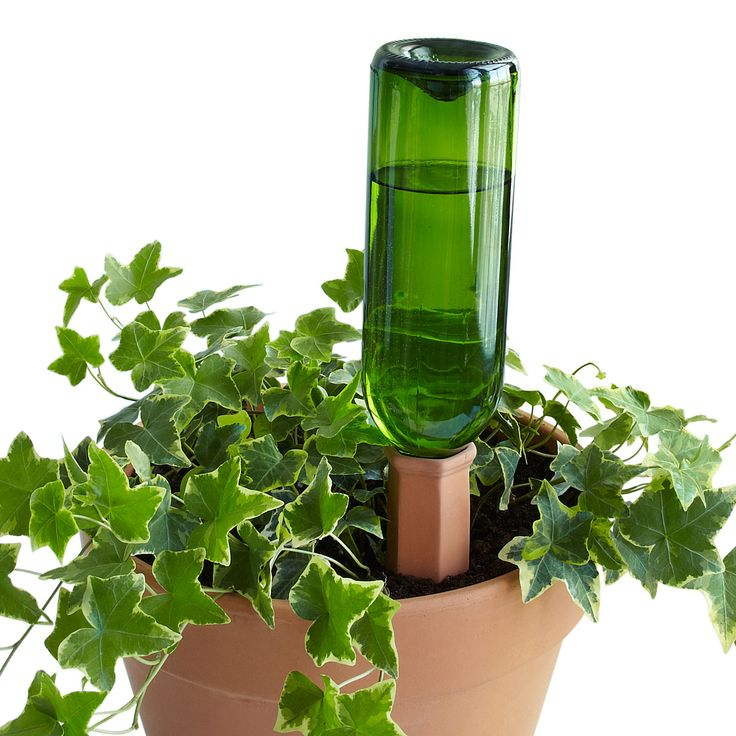 Wondering who will water your plants while you're on vacation? Have trouble remembering to tend them when you're home? Turn a used bottle into a watering system for your plants!