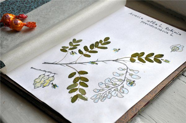 Herbarium By Kids Mine School Projects Jpg How To Make A File