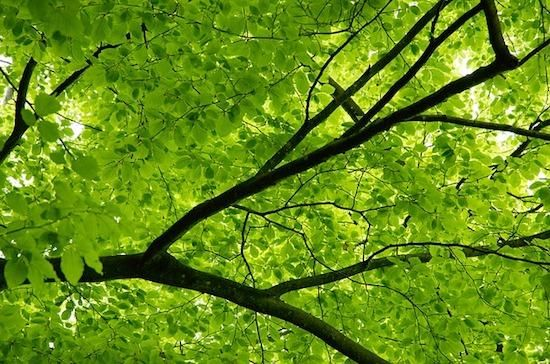 Canopy Tree Jigsaw Puzzle: http://www.jspuzzles.com/puzzle.php?puzzle=2458146&pin
