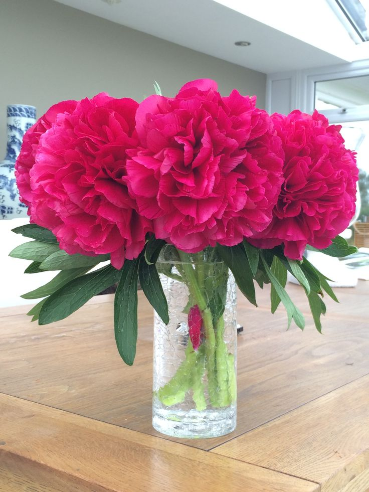 Dark pink Peonies - these are a beautiful fully rounded bloom variety from our gardens