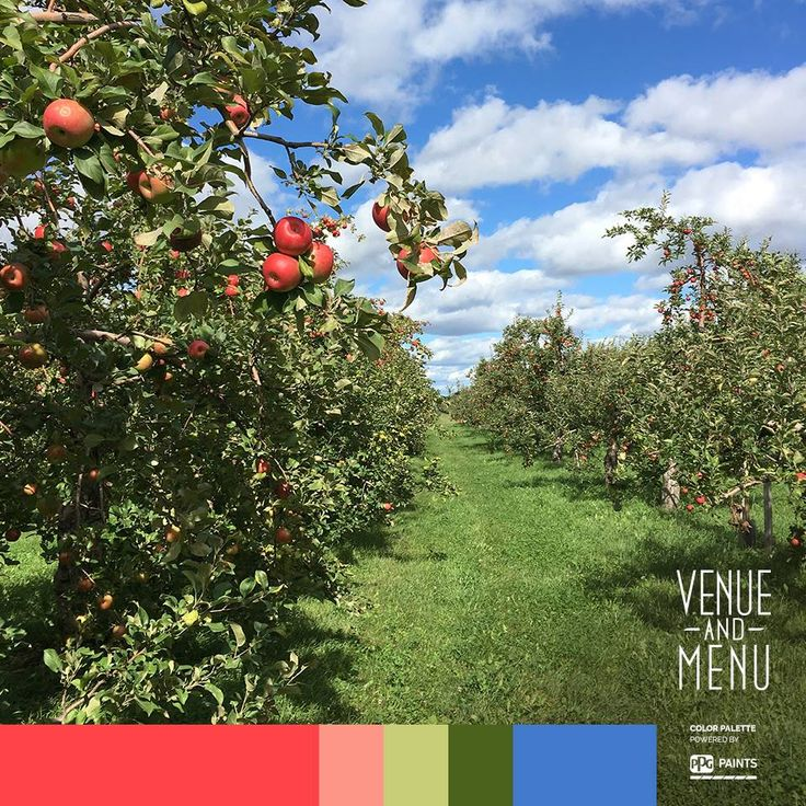 In September in Quebec, it is apple picking season. Enjoy that cherished fall tradition and aim for the invigorating air of colorful orchards. The reward; the taste of the fresh, crunchy , delicious once forbidden fruit. #whataboutthemapples #weekendinQuebeccity #venueandmenu
