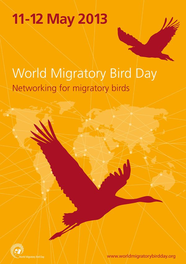 """The 2013 World Migratory Bird Day Theme - """"Networking for migratory birds"""" Migratory birds travel huge distances along their migration routes, sometimes even tens of thousands of kilometers. These connected sites act like 'stepping stones' and are used by birds to migrate. They are important for resting, feeding, breeding and wintering."""