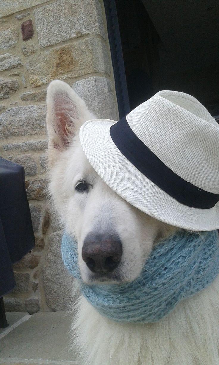 Kostenloses Bild Auf Pixabay Schweizer Weisser Schaferhund Weisser Schaferhund Schaferhunde Und Schwarzer Deutscher Schaferhund