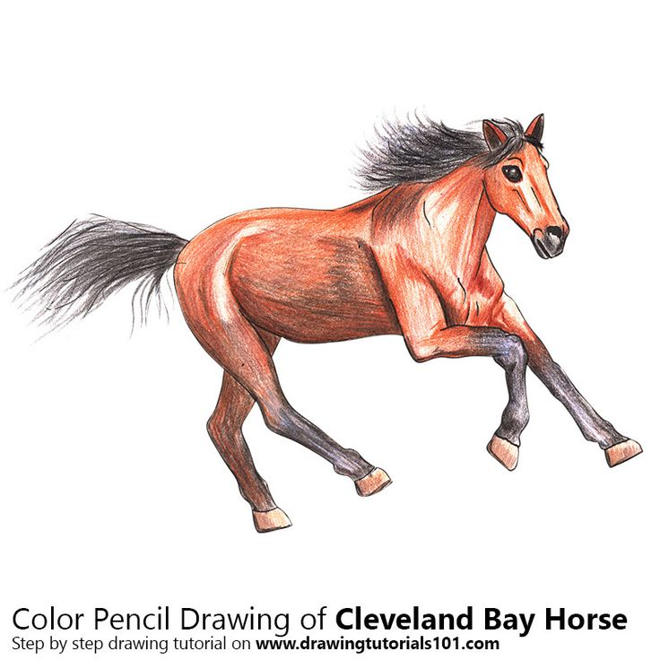 bay horse coloring pages - photo#7