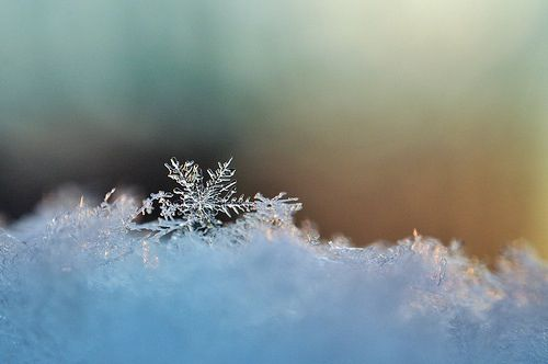 real snowflakes background - photo #29