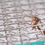 Choose an Indoor Mosquito Trap