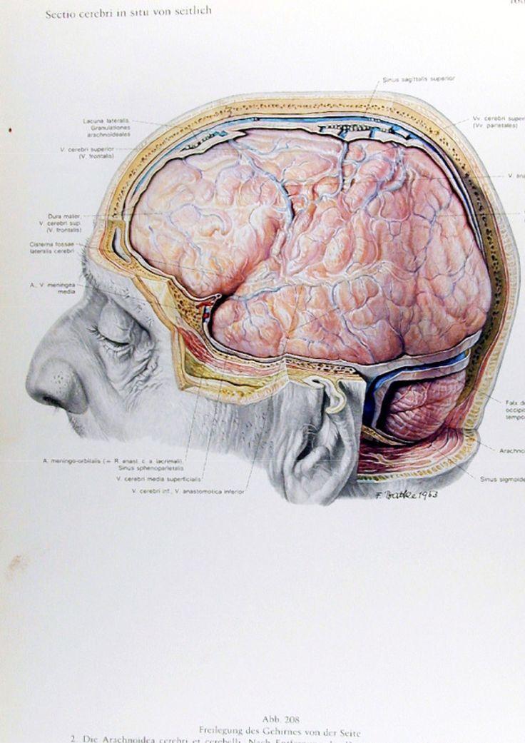 Tolle Anatomie Des Sinus Fotos - Anatomie Ideen - finotti.info