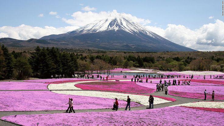 29-paysages-magnifiques-japon Le Fuji Shibazakura Festival, près du mont Fuji, à Yamanashi