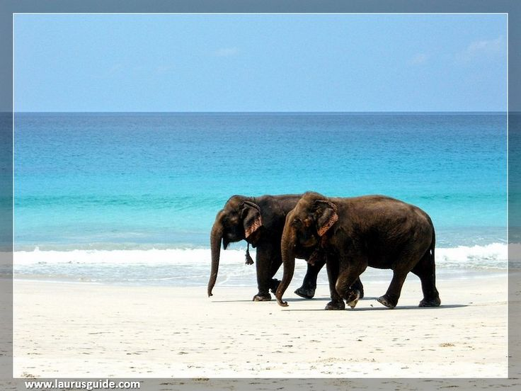 Considered one of the unique beaches in Havelock Island, Elephant Beach is untouched by commercialism and has an environment that exudes a peaceful atmosphere. Popular for snorkeling, Elephant Beach boasts some of the vibrant coral reefs on the island and is easily accessible from Radhanagar Beach.