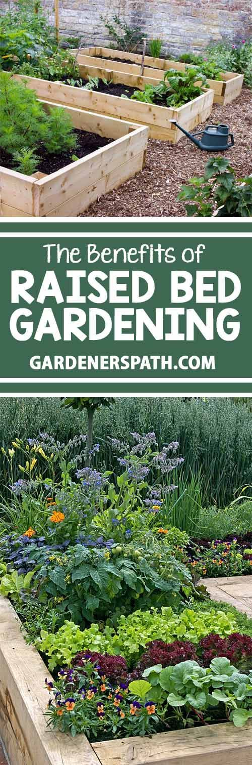Raised beds are excellent for those with hard clay or soils with too much sand. They assist with drainage for climates with too much rain and help retain moisture for those who don't get enough. And they are ideal for those with back and knee problems. Re