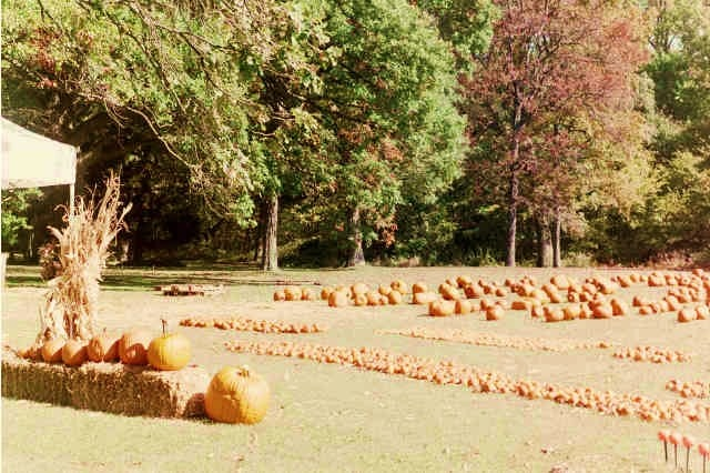 Cleveland ohio pumpkin patches