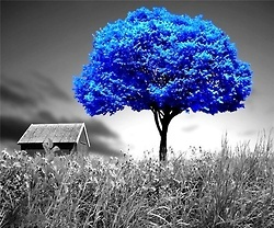 This site is all gorgeous blue! Love the black & whites with a splash of color