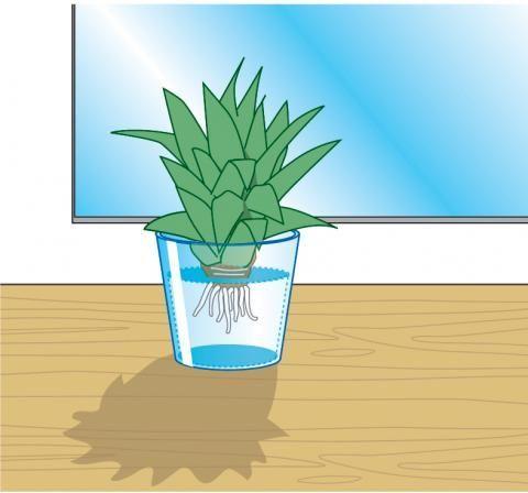 2029 best pflanzen selber ziehen images on pinterest apartment gardening garden plants and. Black Bedroom Furniture Sets. Home Design Ideas