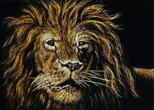 Big Cat ACEO ORIGINAL Scratch Art LION Africa Wildlife Animal Realism M Matson