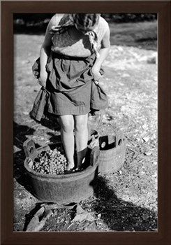 Italian Vintage Photographs ~ Wine Treading in a Vat, Italy Giclee 1930