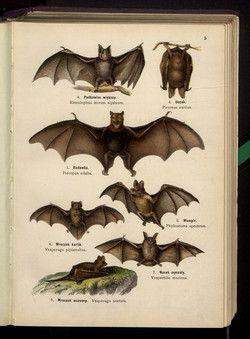 Lampert, Kurt (1859-1918) Atlas panstwa [!] zwierzęcego. Cz. 1, Zwierzęta ssące