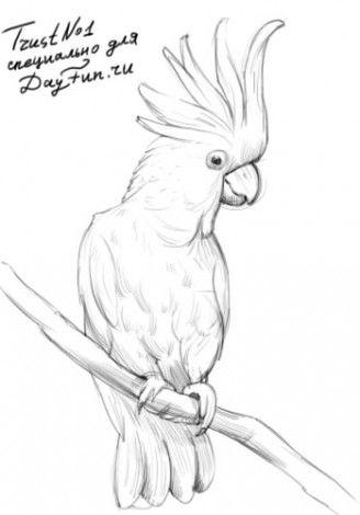 Как нарисовать какаду карандашом поэтапно 4