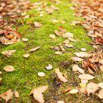 How to avoid Raking Leaves