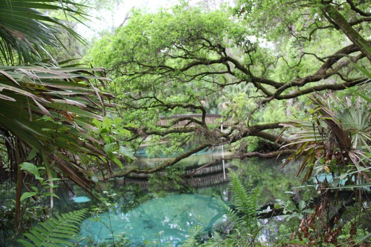 5 Reasons To Visit Ocala/Marion County Florida With The Family #OcalaMarion #ad