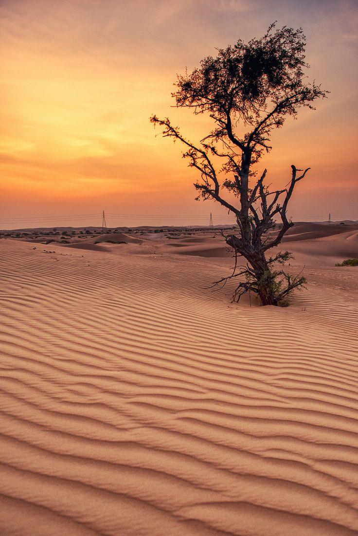 Al Ain - Abu Dhabi - United Arab Emirates (Leonid Iaitskyi)