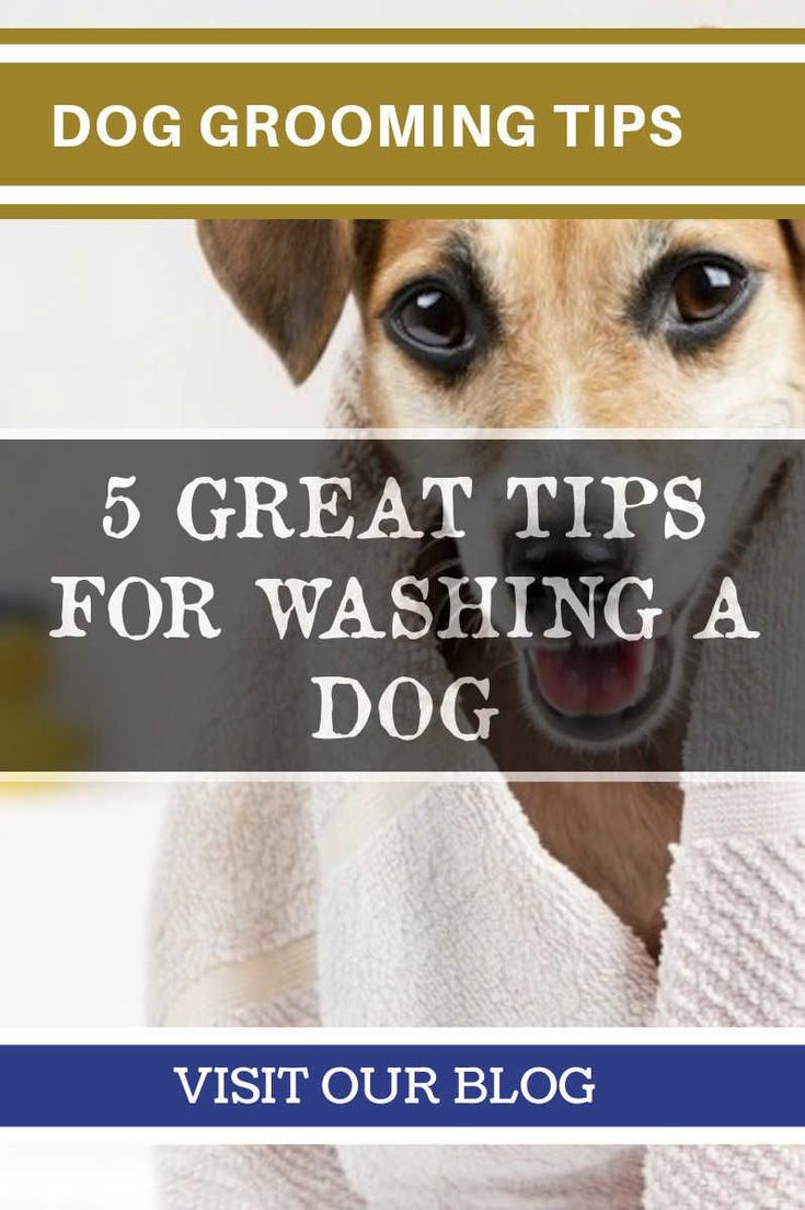 how to sedate a dog at home for grooming