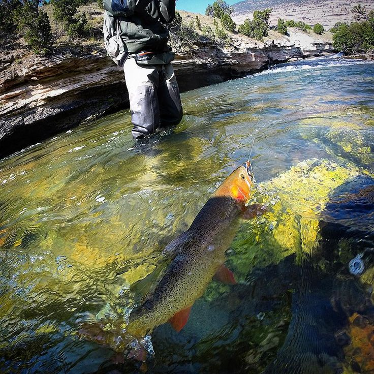 Best 25 salmon species ideas on pinterest salmon for Fly fishing techniques