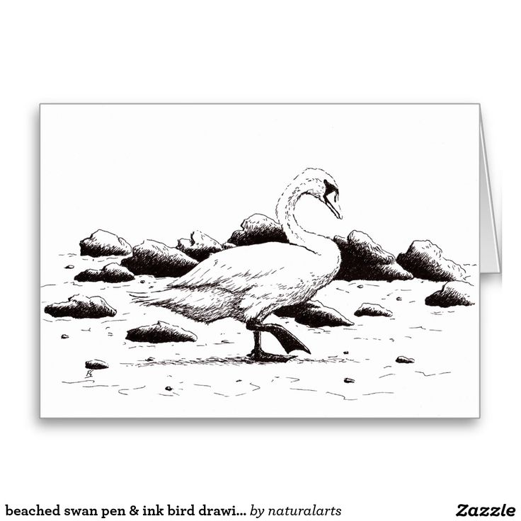 beached swan pen & ink bird drawing greeting card