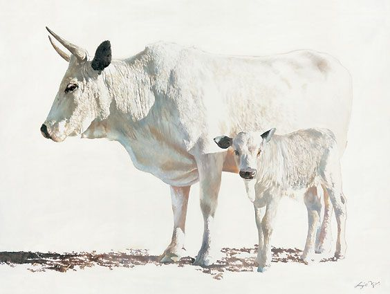 #Leigh_Voigt, sacred herd.