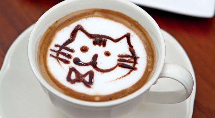 Sabíais que los dos gatos más longevos del mundo bebían café todos los días?  El gato que entró en el Guinness de los récords por ser el más longevo del mundo se llamaba Creme Puff, y murió en 2005 con 38 años. La dueña, Jake Perry, le daba café todas las mañanas. Es algo a tener en cuenta, ya que Perry también era dueña de Grandpa Rex Allen, el anterior ganador del récord, que llevaba la misma dieta y murió con 34 años.